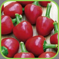 Chillie Cherry Bomb