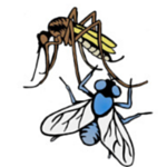 Icon_Insects_100_x_100