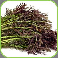Oriental veg - Red frills