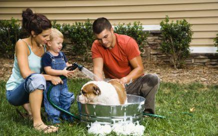 Dog_washing