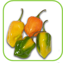 Chillies_Habanero