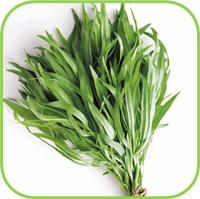 French Tarragon 2