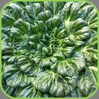 Oriental veg - Tatsoi