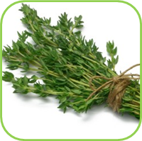 Thyme  -French thyme