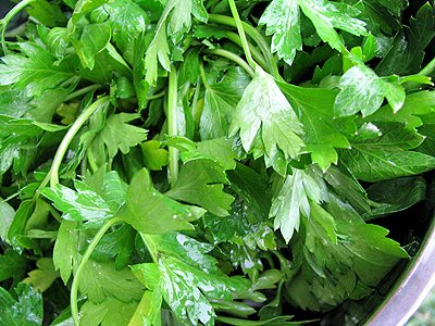 Italian_Parsley