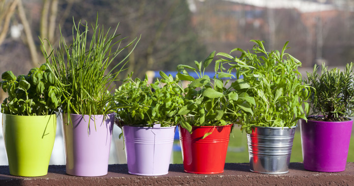 Herbs For The Kitchen Healthy Living