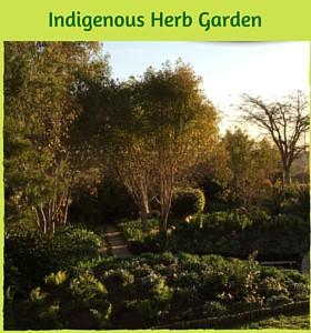 Indigenous Herb Garden