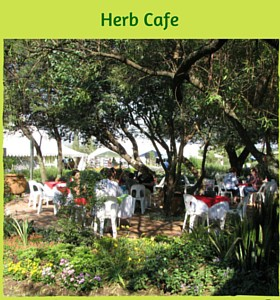 Herb Cafe Tree Area