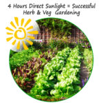 Growing Herbs and Vegetables in Full Sun