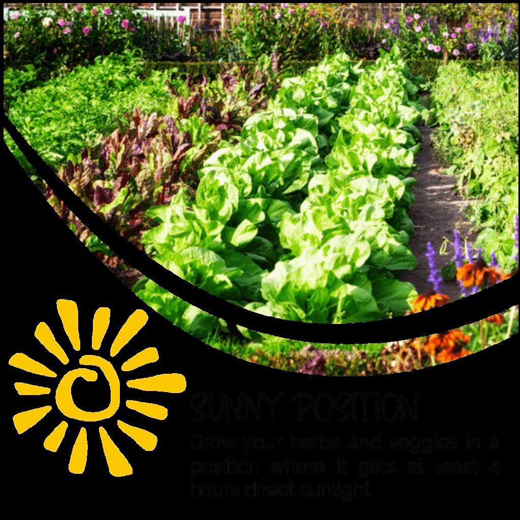 Herbs in Sun