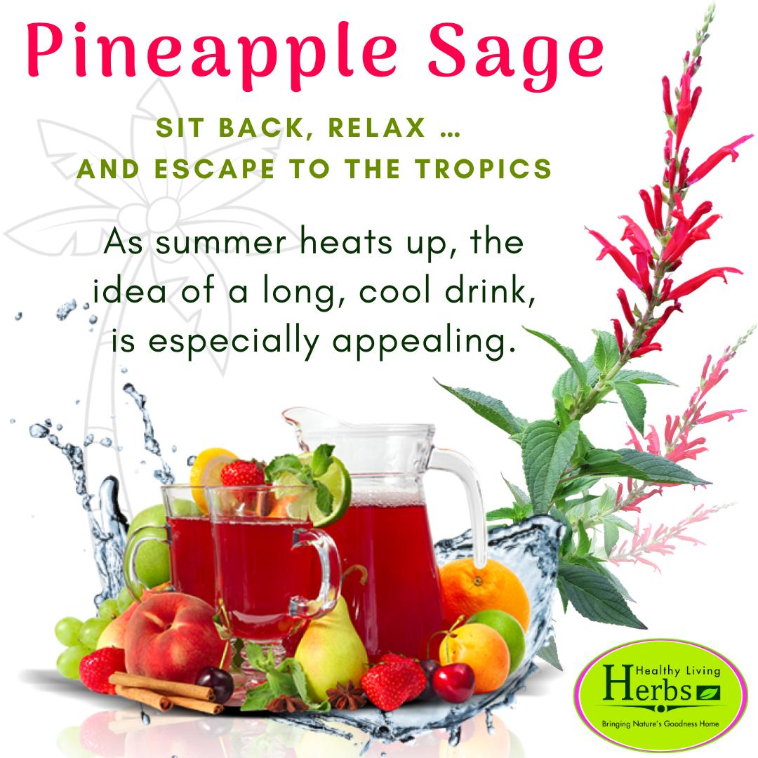 Pineapple_Sage