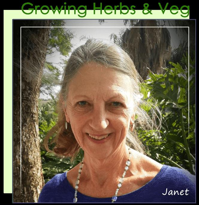 Janet Visee