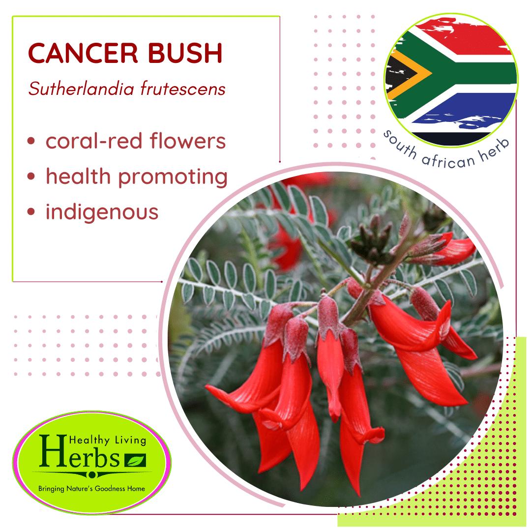 Cancer Bush
